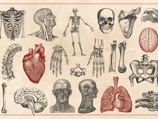 2020美國NAHA高階芳療師認證班☆國際漢方芳療學院-美國NAHA芳療高階課程之解剖生理學班☆2020年7月15日起週三下午台北班