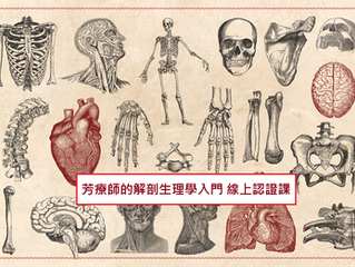 [線上課程]芳療師的解剖生理學入門認證課