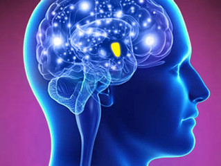 【特論】內分泌系統與新陳代謝-甲狀腺與血糖控制