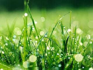 六月份-香氣養夏精油講座【心腸消暑】、【居家三伏】
