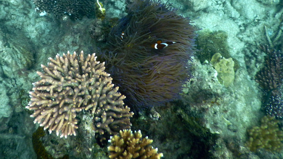 nochmal Nemo