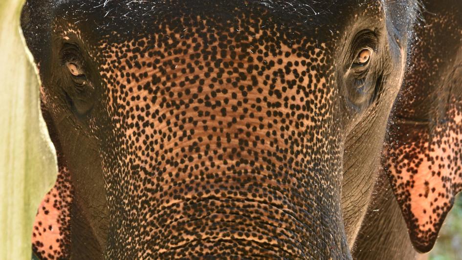 Kenyir Elephant Conservation