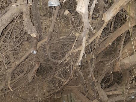 Vergebliche Suche in Puros