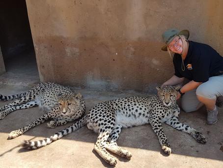 Safari-Abschluß