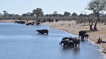 Elefanten im Mudumu Nationalpark