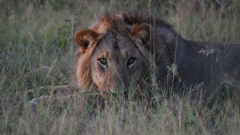 Mamili NP Namibia