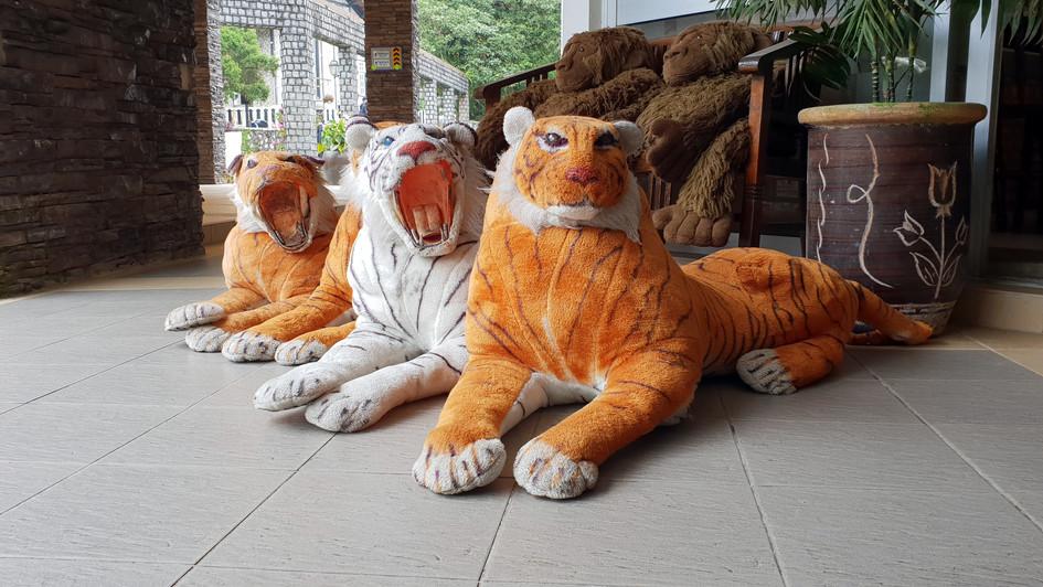 Malayische Tiger...