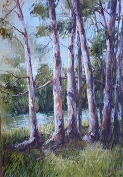 River Forest I