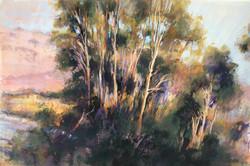 Willaway Sunset