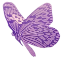 Butterfly lilac test.png