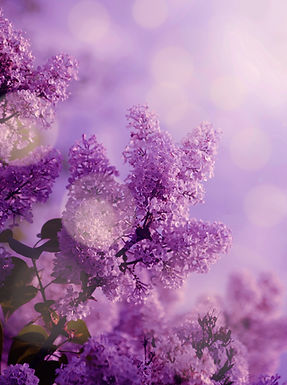 Butterfly%20and%20lilac%20organ%20bush%2