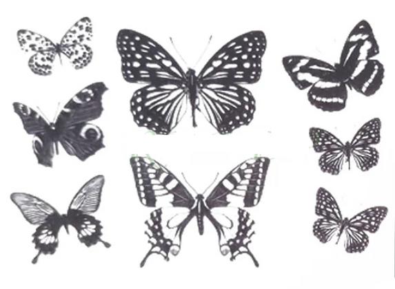 Papillona