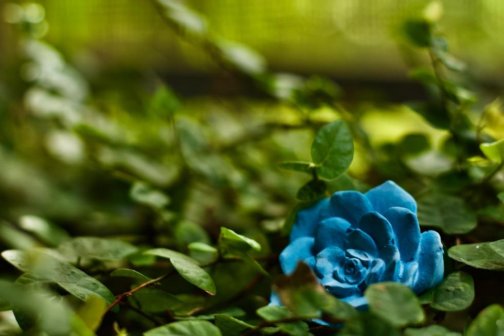 Concrete Decor Flower/Rose