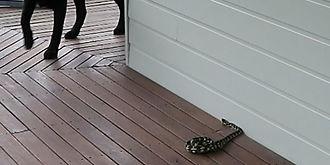 dog snake.jpg