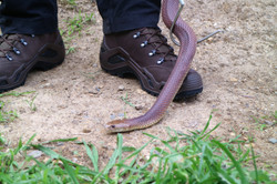 Lowa Boots worn by the Snake Hunter