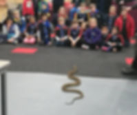 reptile show South Wharf