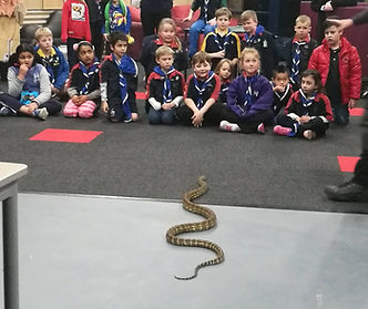 reptile show Carlton North