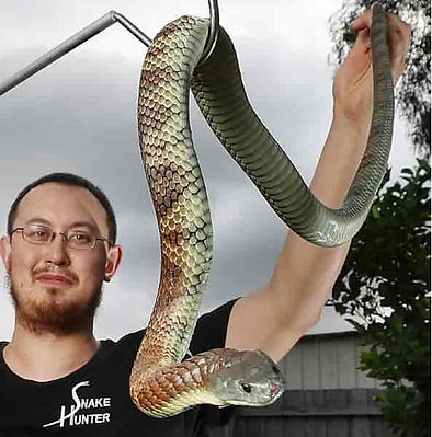 Snake Catcher Warrandyte
