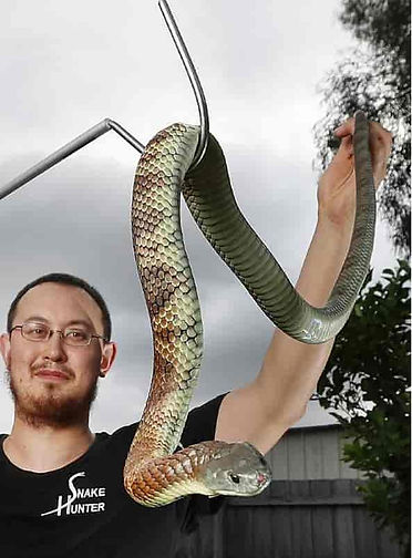 Snake Catcher Campbellfield