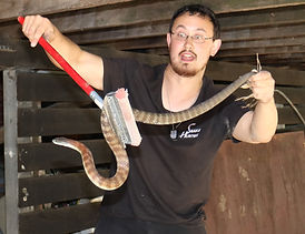 Snake Catcher Melbourne Mark Pelley