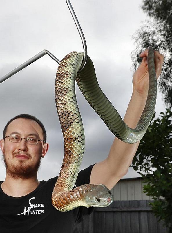 Snake Hunter 3