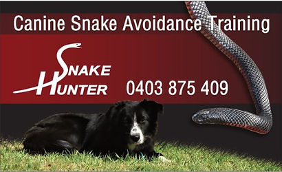 canine snake avoidance Preston