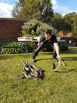 Canine Snake Avoidance