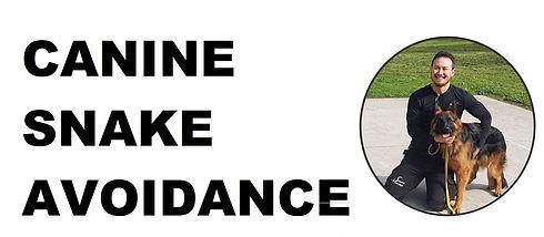 canine snake avoidance 3.jpg