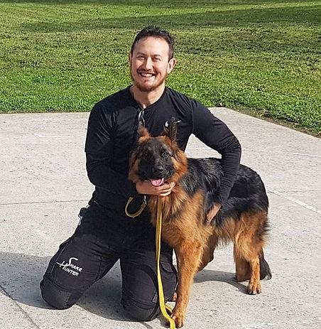 german shepherd canine snake avoidance training dog