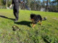 Dog Snake Avoidance
