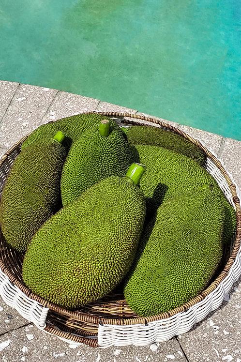 Organic Jackfruit Box