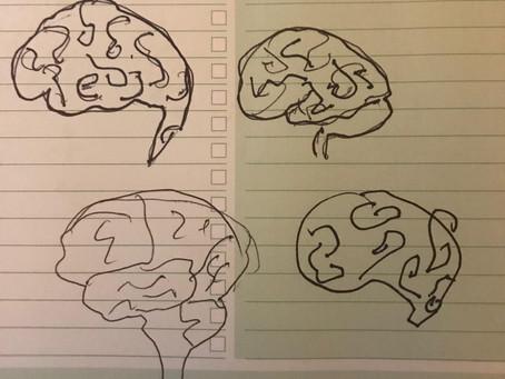 Everyone can draw a Brain