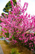 静岡市葵区大岩の松源寺の桃が奇麗でした。