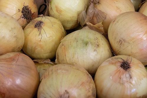 Onion (New Season)