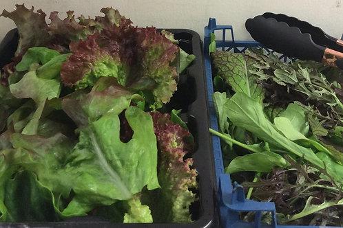 Mixed Salad Leaves - Rottal Veg Garden