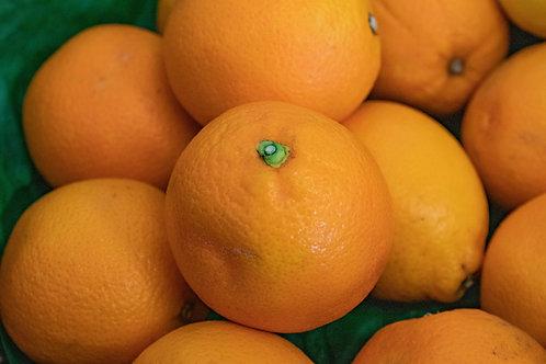Orange - Medium