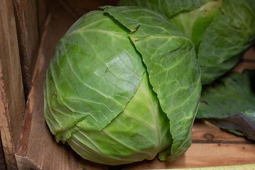 Primo Cabbage
