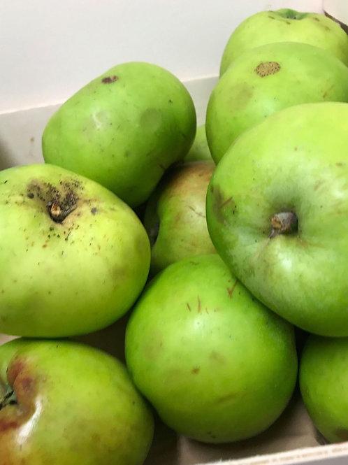 Bramley (cooking) Apple