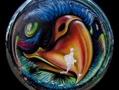 Aigle multicolore