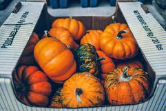 Baby Pumpkins