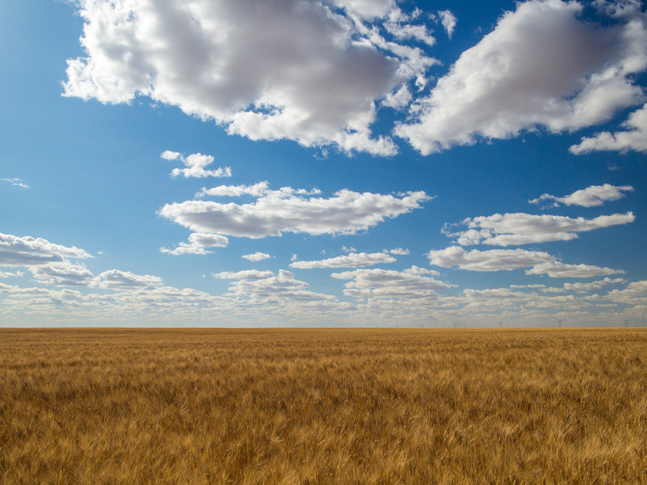wheat and sky.jpg
