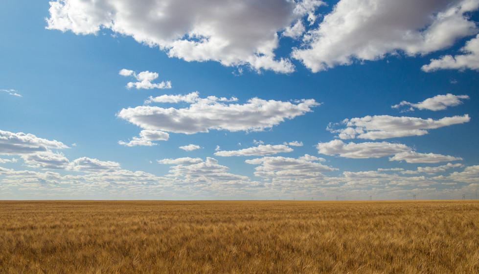 wheat and sky.jpg