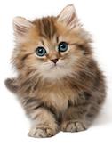 Cat-in-the-hat…er…road…