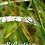 Thumbnail: Reflections DVD
