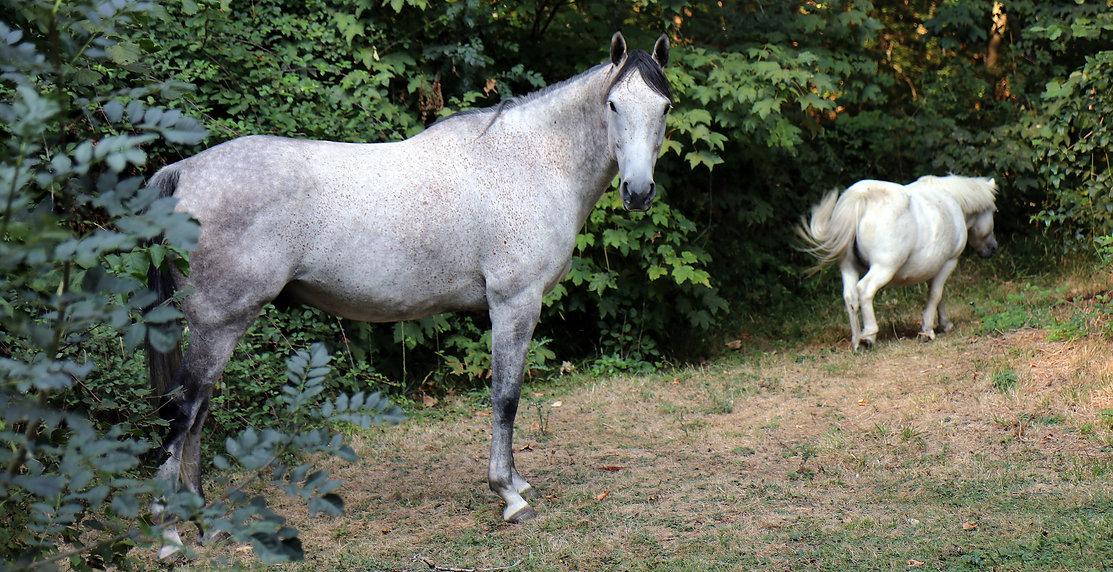 Parc-de-Lesseps-Gite-Equestre.JPG