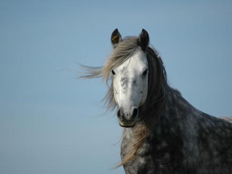 How I became an Equine Photographer