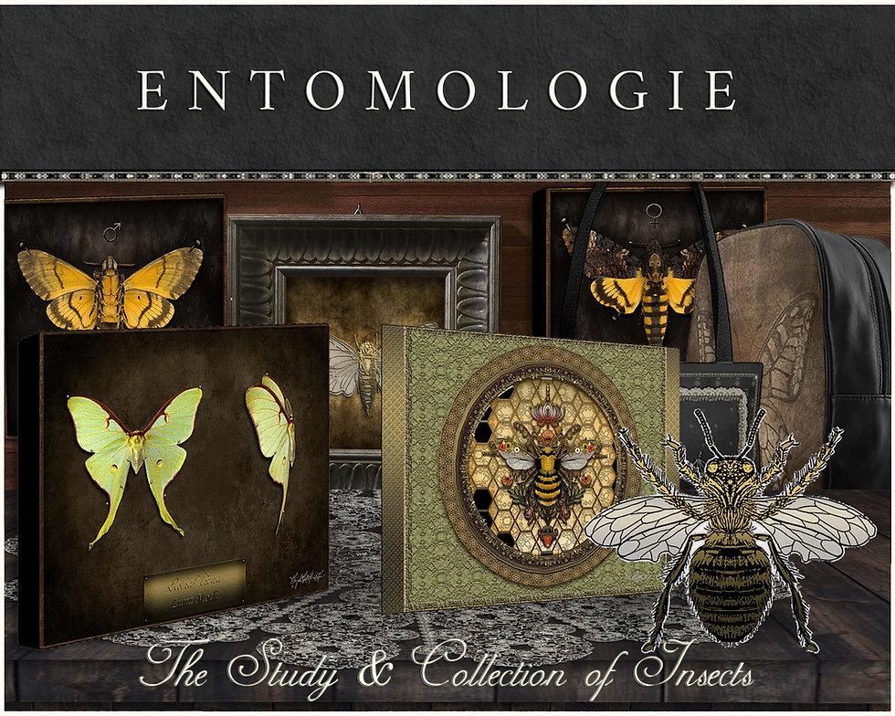 ENTOMOLOGIE COLLECTION.jpg
