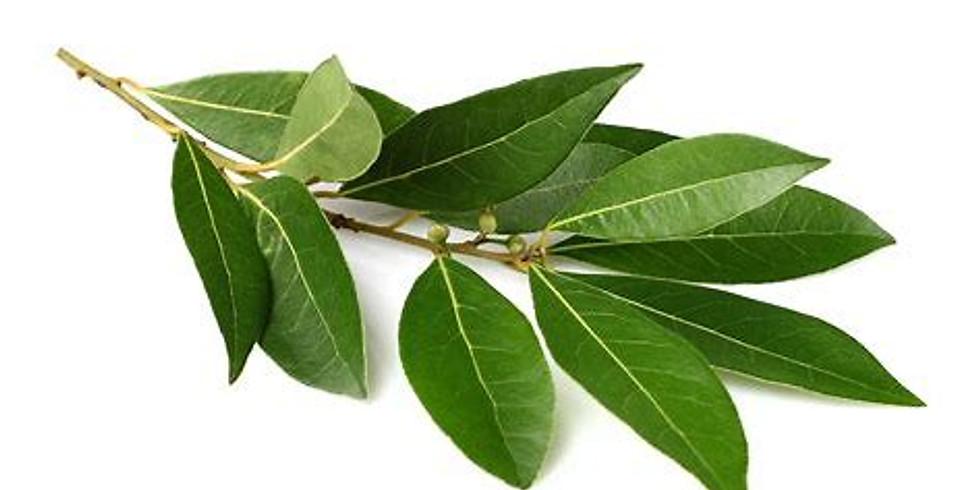 May Virtual Restorative Aroma Yoga Featuring Laurel
