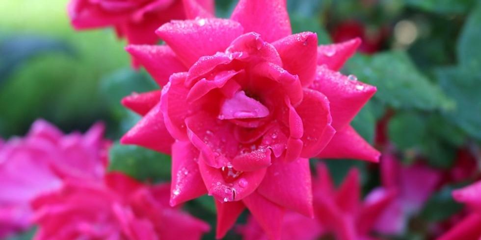 February Virtual Restorative Aroma Yoga Featuring Rose