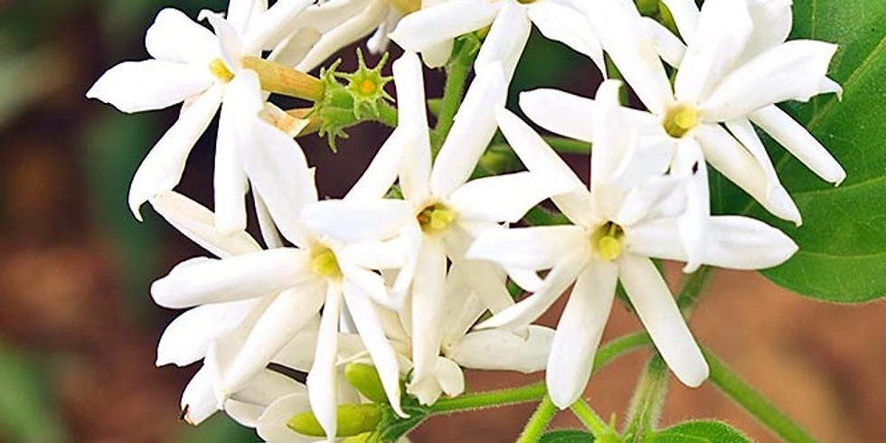 January Virtual Restorative Aroma Yoga Featuring Jasmine